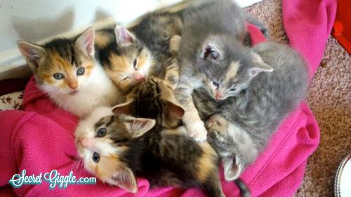 عکس های جالب از گربه های ناز