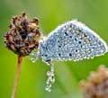 عکس هایی دیدنی از حشرات خیس در نمای نزدیک