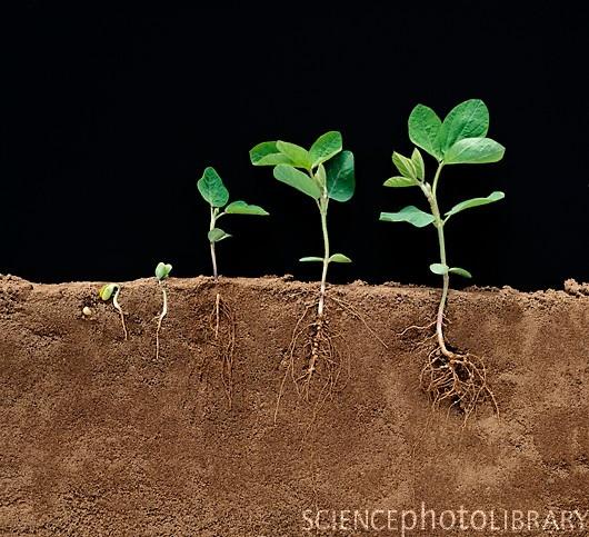 رشد یک گیاه
