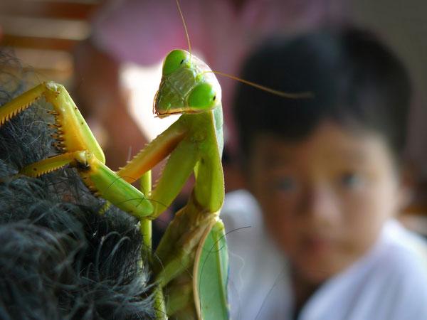 حشرات از نمای نزدیک wWw.CampFa.Ir