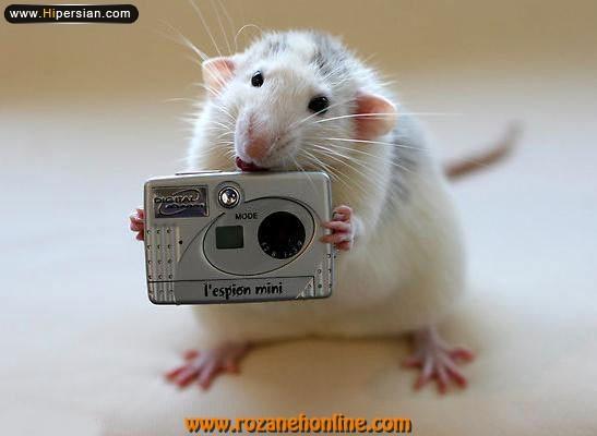wWw.CampFa.Ir شهر موشها!!!