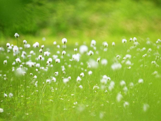 عکس زمین های پوشیده شده از گل wWw.CampFa.Ir