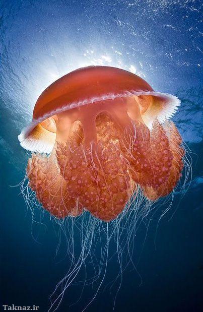 زیباترین عکس های زیرآب 2012 - www.taknaz.ir