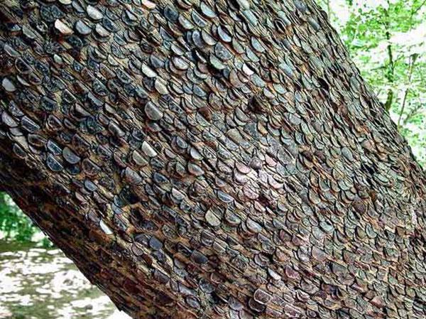 درخت آرزوها را از نزدیک ببینید +تصاویر
