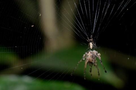 عنکبوت مجسمه ساز
