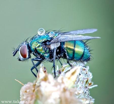 عکس هایی دیدنی از حشرات خیس در نمای نزدیک www.taknaz.ir