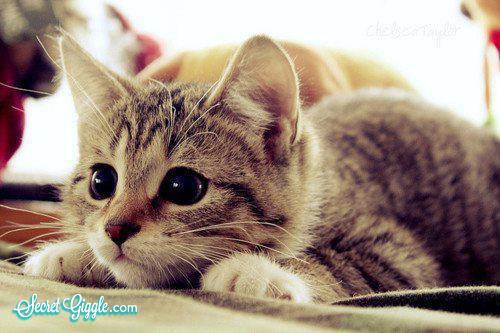 عکسهای جالب از گربه های ناز