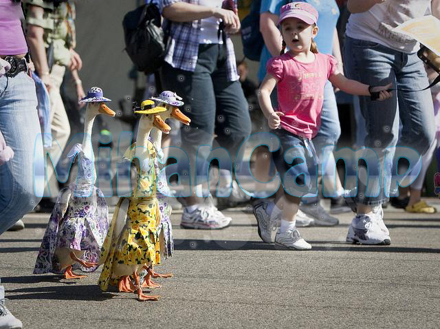 شوی لباس اردک ها بسیار زیبا wWw.CampFa.Ir