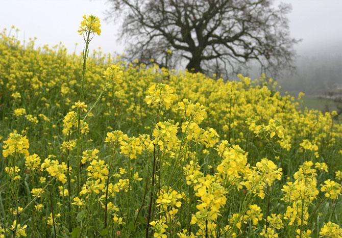 عکس زمین های پوشیده شده از گل