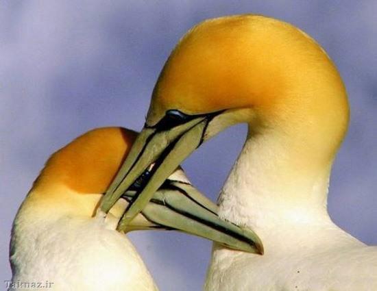 زیباترین عشق های دنیا + تصاویر - www.taknaz.ir