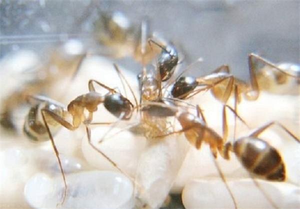 به دنیا آمدن مورچه + تصاویر |www.campfa.ir
